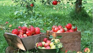 داستانک فروش سیب