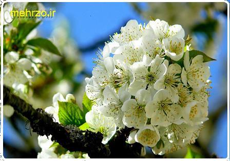 بهار و فصل احساس